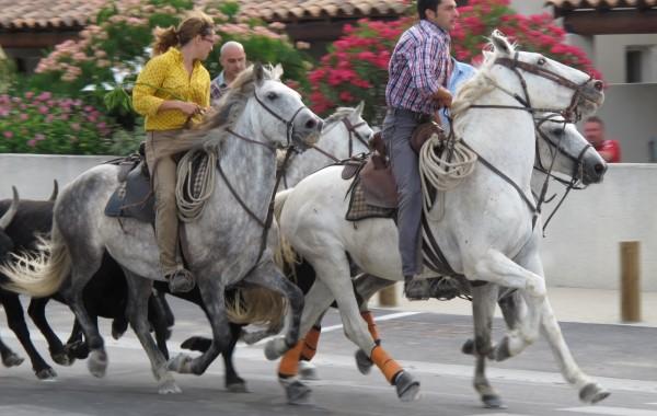 La Camargue dei tori e dei cavalli