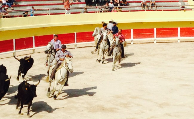 Camargue saintes maries arena cavalli 1