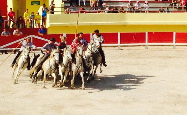 Camargue saintes maries arena cavalli 2