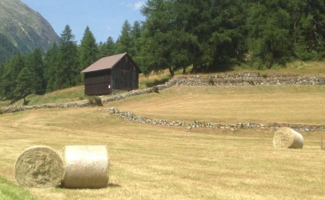 Svizzera Engadina Bever sentieri 8