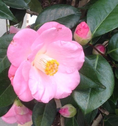 Un soffio di primavera 09
